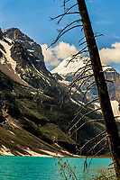 Rugged Lake Louise: The silhouette of a long dead tree stands before the rugged mountains of Lake Louise, Banff National Park, Alberta Canada.