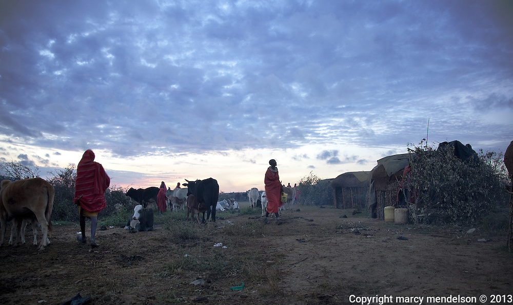 Samburu women tend to the cattle as the sun rises on the chilly morning of the Lmuget, moran's graduation ceremony.