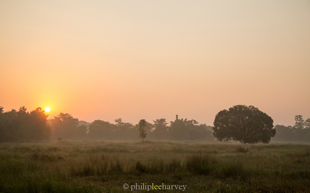 View of field and trees at sunrise, Tadoba National park, India