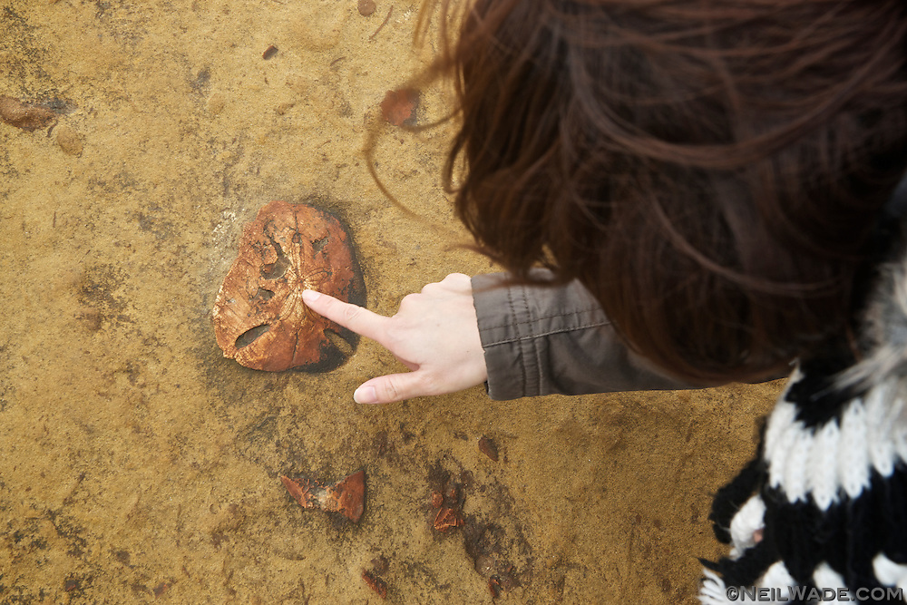 Various kinds of fossils can easily be found in the sandstone all over the Yeliu GeoPark.