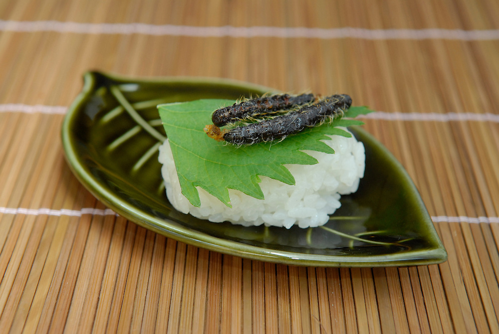 """Sakura moth caterpillar sushi. Tokyo resident Shoichi Uchiyama is the author of """"Fun Insect Cooking"""". His blog on the topic gets 400 hits a day. He believes insects could one day be the solution to food shortages, and that rearing bugs at home could dispel food safety worries."""