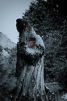 "Nikonians ""Yosemite in Winter""2010  Workshop."