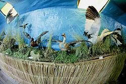 Uros Museum On Floating Island