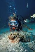 diver and spotted scorpionfish, Scorpaena plumieri, Davis Reef, Islamorada, Florida Keys, Florida Keys National Marine Sanctuary ( Western Atlantic Ocean )    MR 112