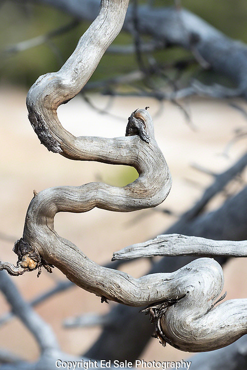 A dead root of a fallen tree creates a unique and interesting shape as it decays on the Mary Mountain trail in Yellowstone National Park