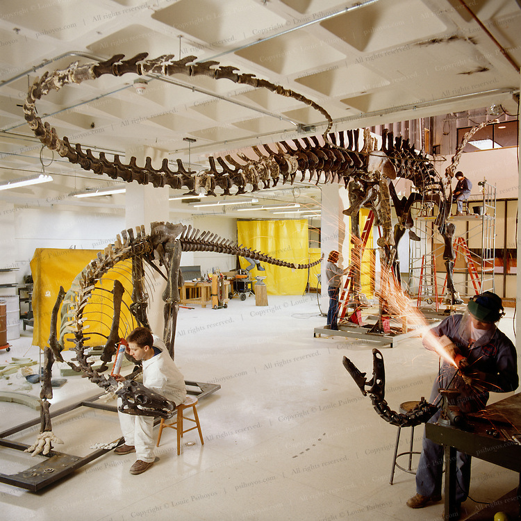 Dinoaurs mounted for St. Paul Museum of Science.