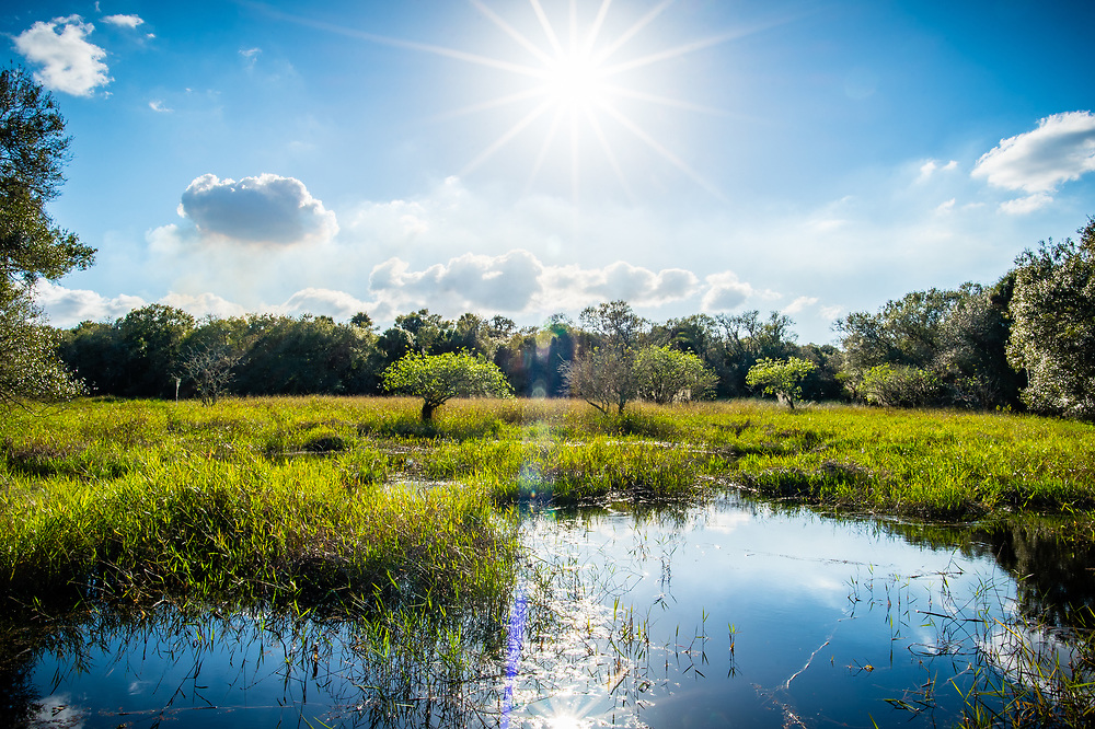 Sun flare over a Florida marsh is reflected in the water.