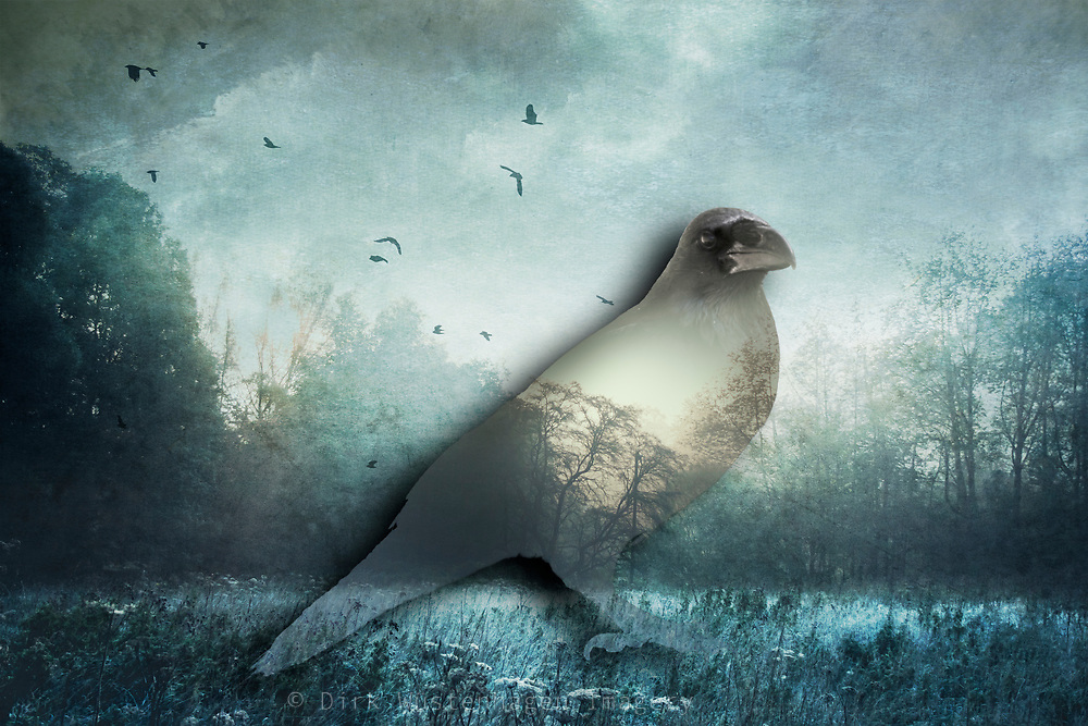 Double exposure of a raven and a misty landscape<br /> Redbubble --> http://bit.ly/Raven_RB