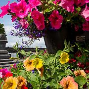 LCCC Floral Displays