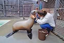 Sea Lion & Leif Johnson