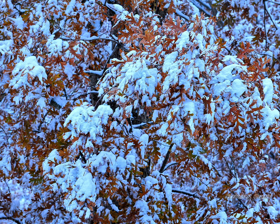 """I captured this nature portrait, as well as, """"A Snowy Sketch"""", """"Snow-Capped"""", and """"Snowy Treetops"""", in my backyard on November 11th, 2019. I captured this image earlier in the evening. What caught my eye the most about this scene was the way the brightness of the snow contrasted with brown color of the leaves, forming different patterns throughout the entire image. Since it was brighter out, I wanted to capture as much of the snow as I could since there was light still shining on it. Since it was very cold this day, I adjusted the white balance to slightly blue to reflect this.<br /> <br /> Printed on Hahnemühle German Etching paper. Limited to 200 productions per size.<br /> <br /> Framed prints are available in 20"""" x 16"""", 30"""" x 24"""", and 40"""" x 30"""" sizes."""