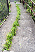 fresh green weeds growing in the cracks by concrete urban stairs