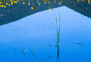 Wild sunflowers reflection, Columbia Basin, Washington, USA
