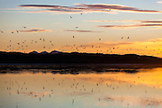 A flock of seabirds at sunset on the coast near Calypsobyen, Svalbard.