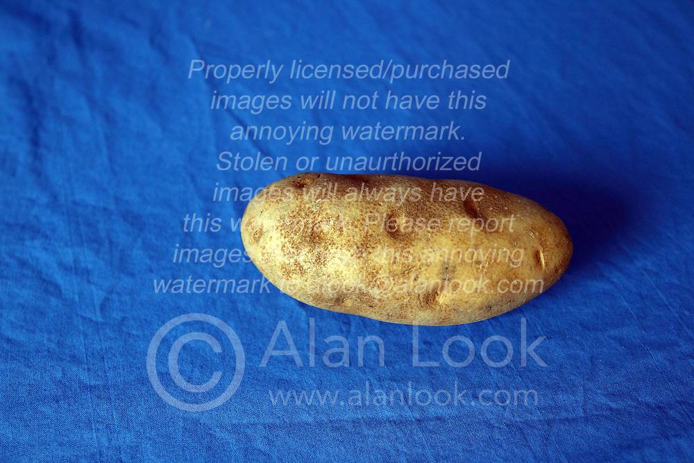 18 February 2016:   Studio - Potato on blue #019.  A single baking potato shot in a studio on a blue background.
