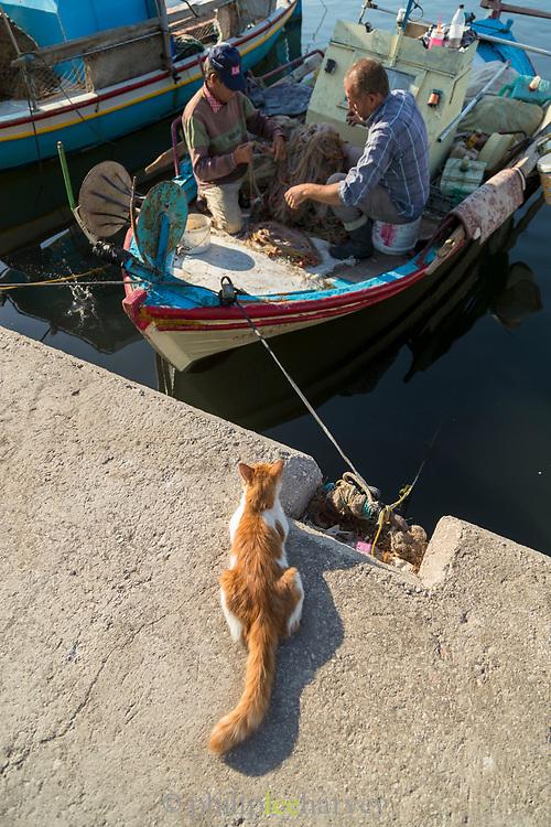 Cat watching fishermen checking fishing net on boat moored in harbor at sunrise, Skala Kallonis, Lesbos, Greece