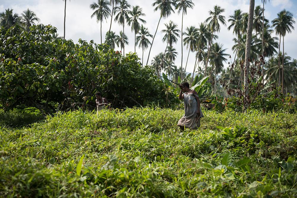 Karkar Island, Papua New Guinea - August 10, 2017: Two women use a machete to cut the grass and brush on a copra and cacao plantation on Karkar Island, Papua New Guinea