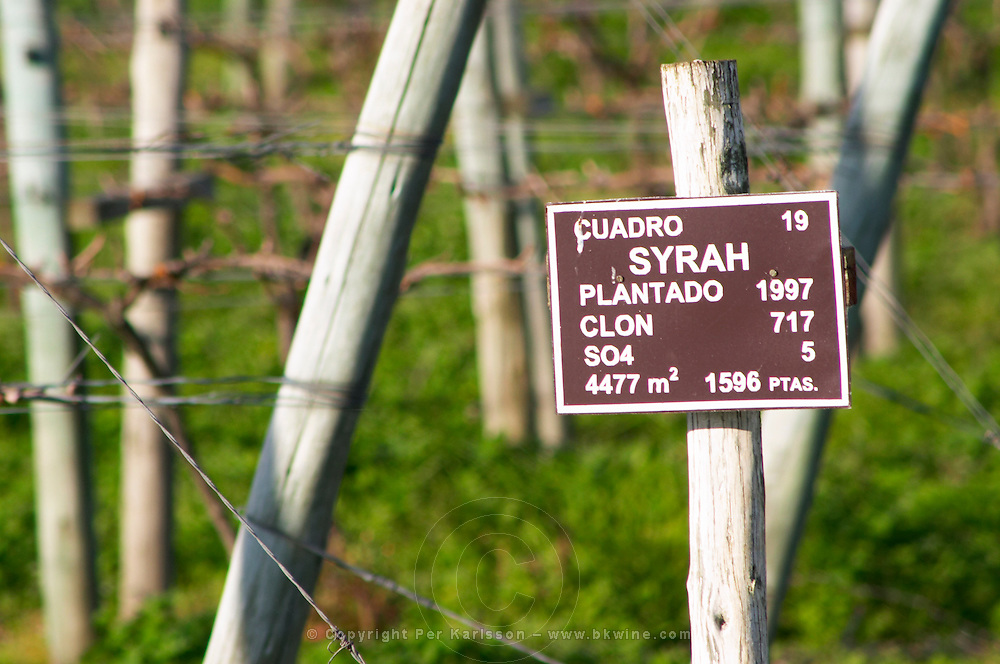 A sign in the vineyard showing that this plot is planted with Syrah Vinedos y Bodega Filgueira Winery, Cuchilla Verde, Canelones, Montevideo, Uruguay, South America