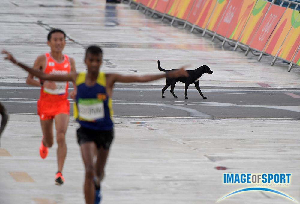 Aug 21, 2016; Rio de Janeiro, Brazil; A dog runs across the course during the marathon during the Rio 2016 Summer Olympic Games at Sambodromo.