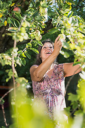Senior woman harvesting green apple, Altoetting, Bavaria, Germany