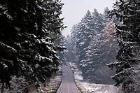 Podlasie, 30.11.2020. Pierwsze wieksze opady sniegu na Podlasiu tej zimy N/z droga przez osniezony las z Suprasla do Krynek przez Puszcze Knyszynska fot Michal Kosc / AGENCJA WSCHOD