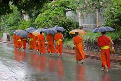 Monks Walking To Receive Food