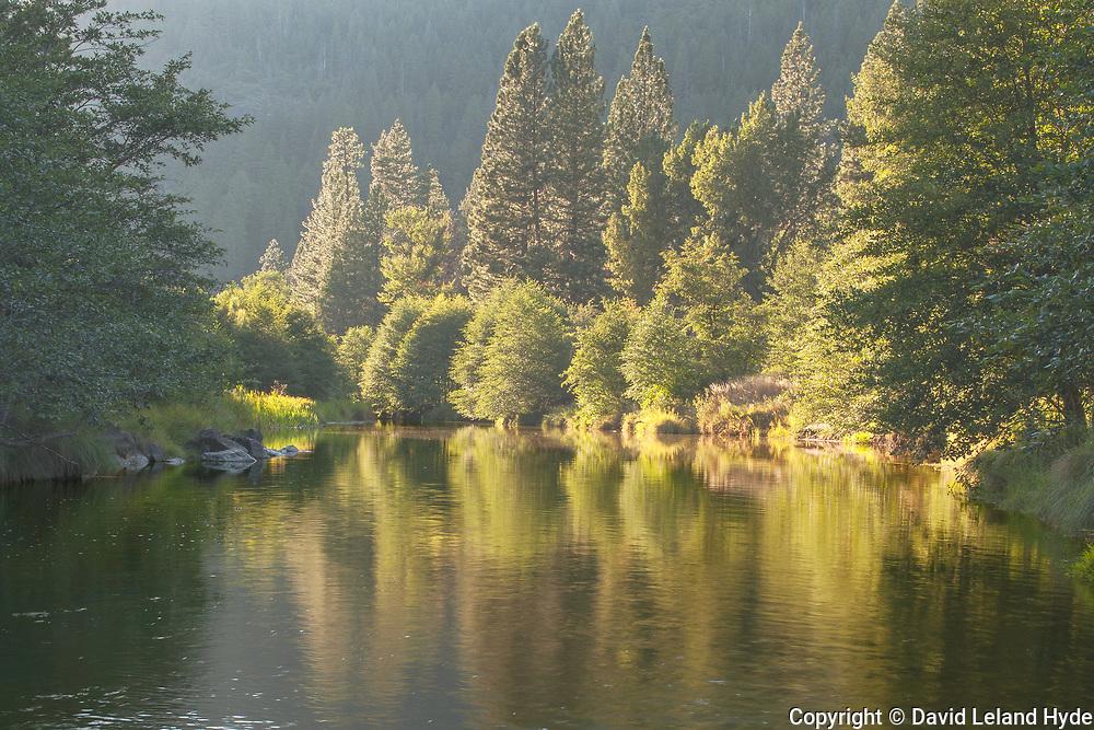 Looking Down Indian Creek, Genesee Woods, Genesee Valley, California Mountains, Summer, Cool Water Pools, Reflections Pool, Tuft Grass, Alders, Ponderosa Pine