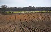 Lines of soil ridges prepared for potatoes, Suffolk, England, UK