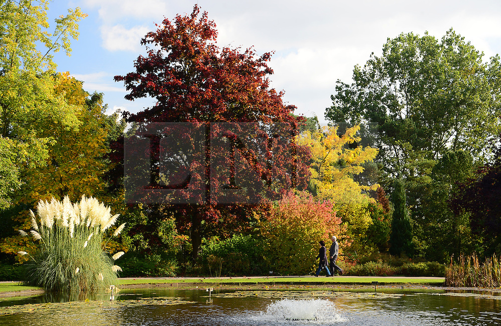 © Licensed to London News Pictures. 11/10/2015. Pocklington, UK. People walk past the autumn colours on show at Burnby Hall Gardens, Pocklington, East Yorkshire. Photo credit : Anna Gowthorpe/LNP