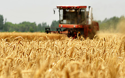 June 11, 2017 - Cangzhou, China -  A harvester collects wheat in Nanpi County, north China's Hebei Province. More than 70 percent of summer wheat have been harvested across the country.  (Credit Image: © Mu Yu/Xinhua via ZUMA Wire)