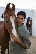 Stable manager with Marwari horse at Rohet Gargh, Rajasthan, Udaipur.