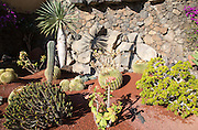 Small cacti garden with different varieties of cactus, Lanzarote, Canary Islands, Spain