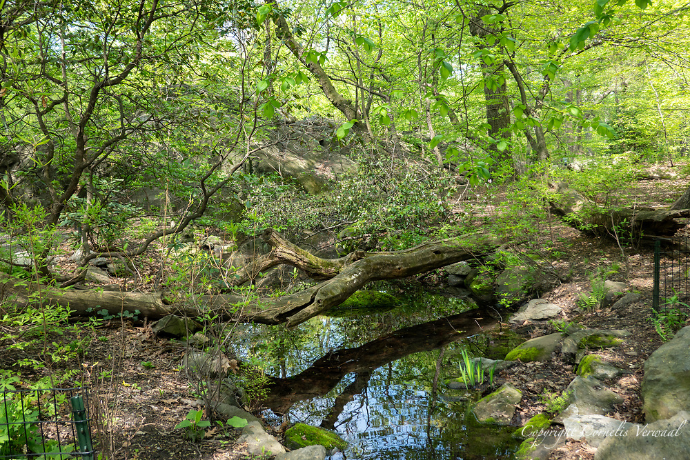 Stream in The Ramble of Central Park