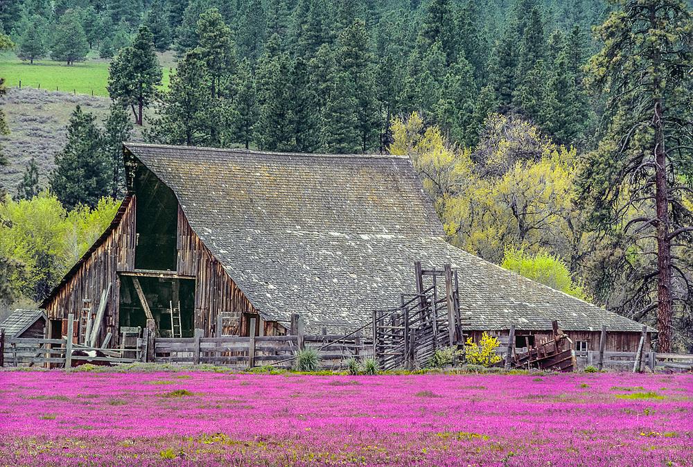Barn and spring flowers near Selah, Washington, USA