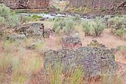 Palouse River and Basalt Landscape, WA.