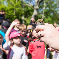 Manomet's Evan Dalton holds a Great Crested Flycatcher during a talk about bird banding to elementary school students in Manomet, Massachusetts.