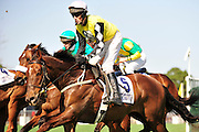 27 March 2010 : Paddy Young holds eventual winner SPY IN THE SKY steady early in the Gr. II Carolina Cup hurdle race.