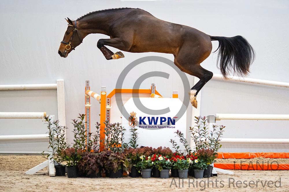 Numos<br /> KWPN Select Sale 2020 <br /> © DigiShots