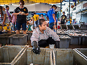 14 AUGUST 2015 - BANGKOK, THAILAND: Workers sort fresh water farmed fish in Saphan Pla fish market. The fish is harvested on farms just beyond Bangkok and brought into the city in trucks. It's sorted, graded, sold and shipped out in a matter of hours. Saphan Pla fish market is the wholesale fish market that serves Bangkok. Most of the fish sold in Saphan Pla is farmed raised fresh water fish. The market is open 24 hours but it's busiest in the middle of the night and then again from about 7.30 until 11 in the morning.       PHOTO BY JACK KURTZ