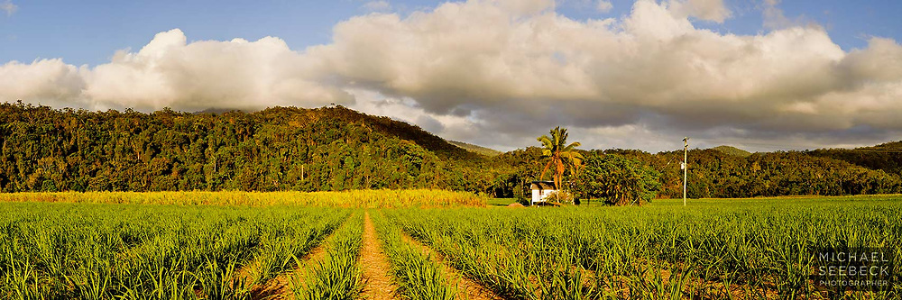 A panoramic image of a cane farm near Gordonvale, south of Cairns.<br /> <br /> Code: HAQT0037<br /> <br /> Open Edition Print and available as Limited Edition Print