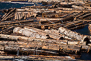 Logging, Gold River, Vancouver Island, British Columbia, Canada