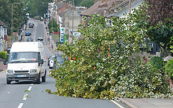 ©Licensed to London News Pictures 21/08/2020             Plumstead, UK. A tree has fallen across the road because of the strong winds from storm Ellen on  Bostall Hill, Plumstead, South East London. Photo credit: Grant Falvey/LNP