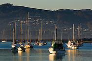 Boats anchored in Morro Bay, California