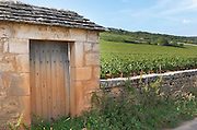 """Vineyard. Domaine Thenard. """"Le Montrachet"""" Grand Cru, Puligny Montrachet, Cote de Beaune, d'Or, Burgundy, France"""