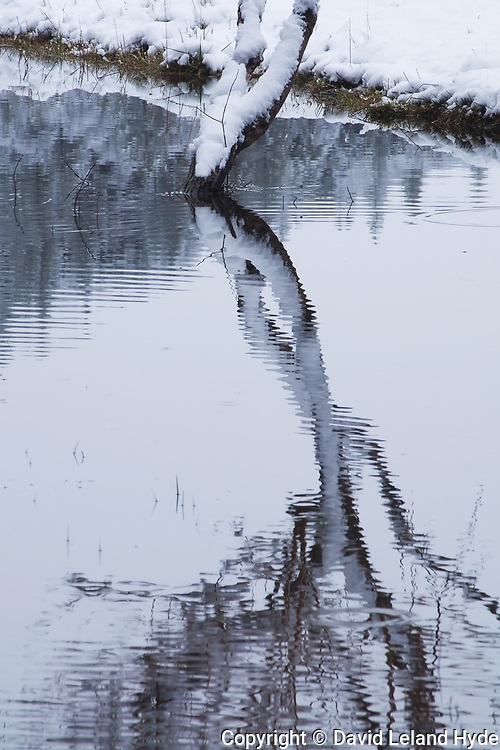Fruit Tree Reflection, Genesee Valley Ranch, Winter Scenes, California Rivers, Irrigation Ditch, Diversion From Indian Creek, Snow Scenes, Agriculture, Cool Water Pools
