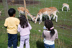 Young girls and boy looking at reindeer on a children's outing to a working farm,