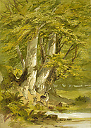 Beech trees from the book  The theory and practice of landscape painting in water-colours illustrated by a series of twenty-six drawings and diagrams in colours and numerous woodcuts by Barnard, George, 1807-1890 Published in 1885 by George Routledge and Sons London