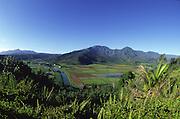 Taro Fields, Hanalei, Kauai, Hawaii, USA<br />