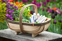 Wooden trug with honesty, euphorbia, gloves and secateurs