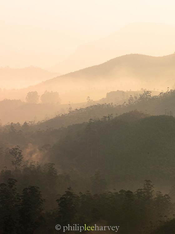 Dawn at the tea plantations in Munnar; a hill station in Kerala; India